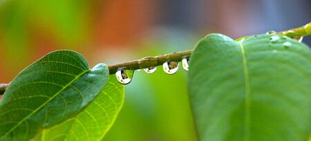 waterdrops: close up of waterdrops on a plant Stock Photo