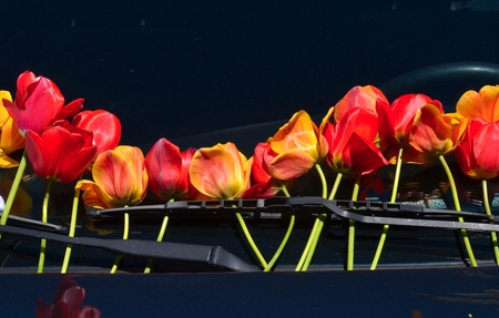 picture of a tulips on windshield