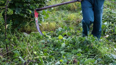 mows: man mows a grass with a scythe on green meadow Stock Photo