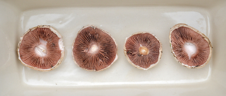 fungoid: picture of a Fresh harvested mushrooms