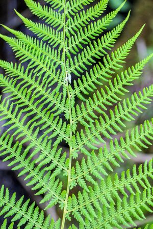 screen savers: great green bush of fern in the forest Stock Photo