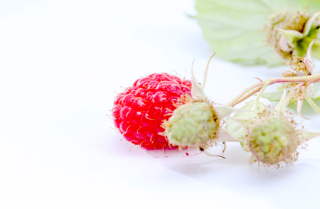 organic raspberry: picture of a close-up of the ripe and unripe organic raspberry in studio Stock Photo