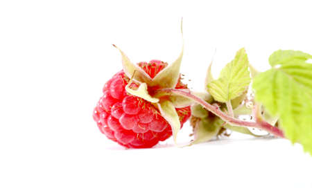 organic raspberry: picture of a close-up of the ripe organic raspberry in studio Stock Photo