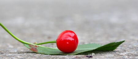 sour cherry: Picture of a Sour Cherry on cement background