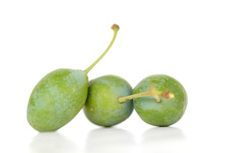 nus: picture of an organic Green plums on tree Stock Photo