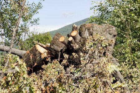 deforestacion: dibujo de unos troncos de �rboles cortados, el concepto de la deforestaci�n Foto de archivo