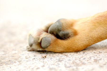 picture of a paw of an adult dog on cement background Stock Photo