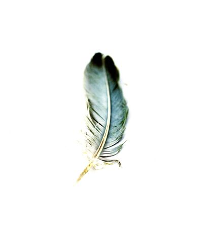 weightless: image of an single feather