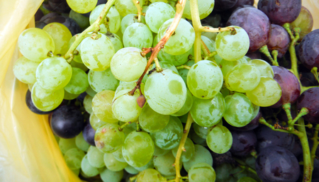 waterdrops: picture of a Ripe grapes with waterdrops.
