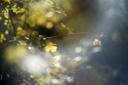 warm colors: colores cálidos de las hojas en el bosque de otoño, efecto de desenfoque