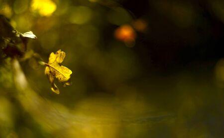 colores calidos: colores cálidos de las hojas en el bosque de otoño