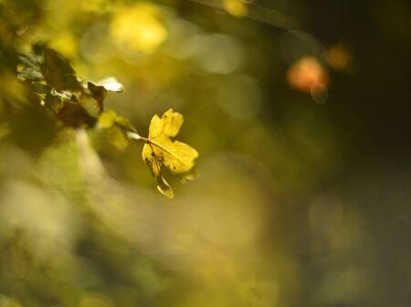 warm colors: colores cálidos de las hojas en el bosque de otoño