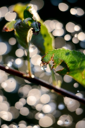 envoronment: picture light summer rain drops levitating in the air against the sun .Bokeh