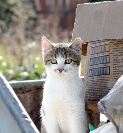 trash container: picture of a Homeless Kitten Cat On The Trash Container,