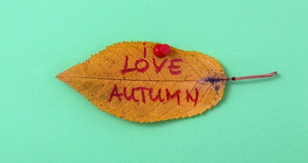 white pushpin: picture of a autumn walnut leaves with handwritten text love autumn,