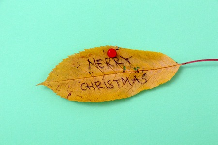 picture of a autumn walnut leaves with handwritten text merry xmas Stock Photo