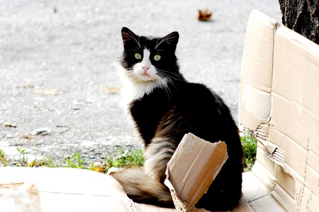 picture of a stray cat on a cardboard box