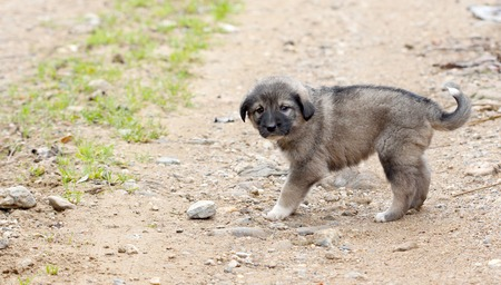 pupy: sad abandoned puppy on the old village road