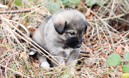 pupy: picture of a sad abandoned puppy on the chaparell