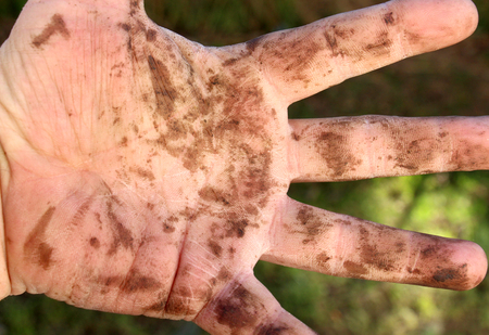 dirty man hands after working on a garden , close up Stock Photo