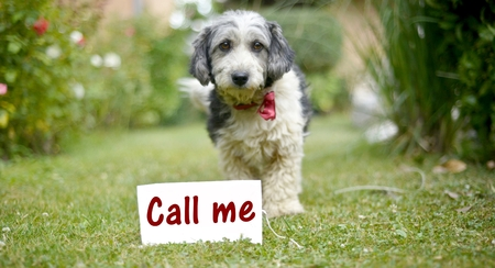 call me: picture of a The cute black and white adopted stray dog on a green grassfocus on a head of dog. card with text call me.
