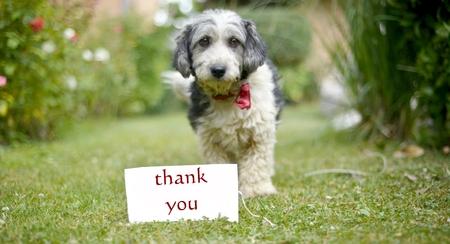 画像、かわいい黒と白犬の頭の上の緑の grassfocus で野良犬を採用します。テキストありがとうカード