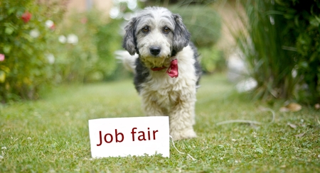 career fair: picture of a The cute black and white adopted stray dog on a green grassfocus on a head of dog. card with text job fair, .