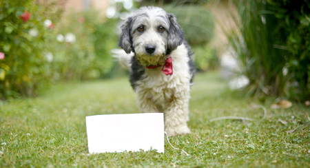 picture of a The cute black and white adopted stray dog on a green grassfocus on a head of dog. card with text call me.