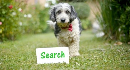 picture of a The cute black and white adopted stray dog on a green grassfocus on a head of dog. card with text search Stock Photo
