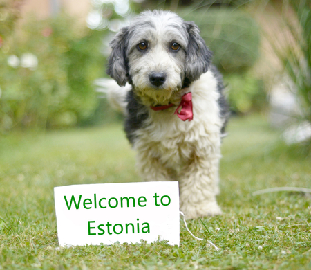 picture of a The cute black and white adopted stray dog on a green grass. focus on a head of dog. Text welcome to estonia