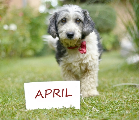 The cute black and white adopted dog and paper with text april