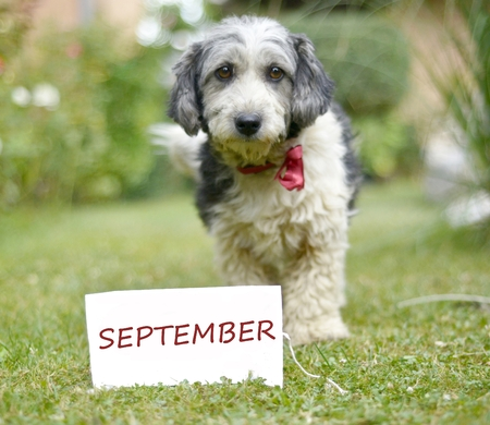 The cute black and white adopted dog and paper with text september