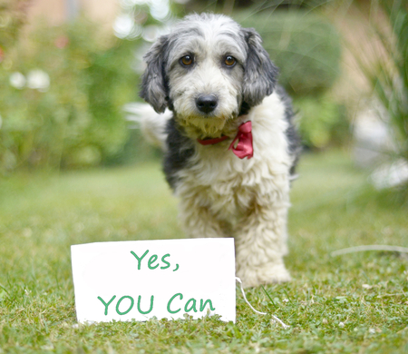 The cute black and white adopted dog and paper with text yes you can Stock Photo