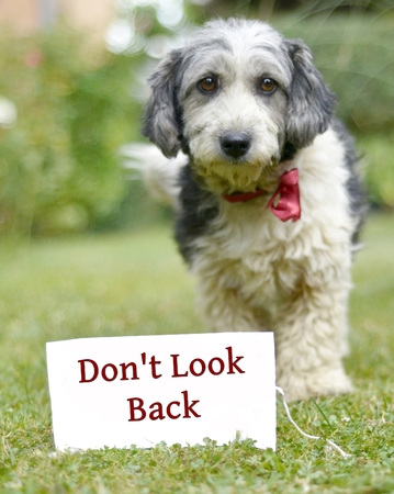 picture of a The cute black and white adopted stray dog on a green grass,focus on a head of dog. card with text Stock Photo