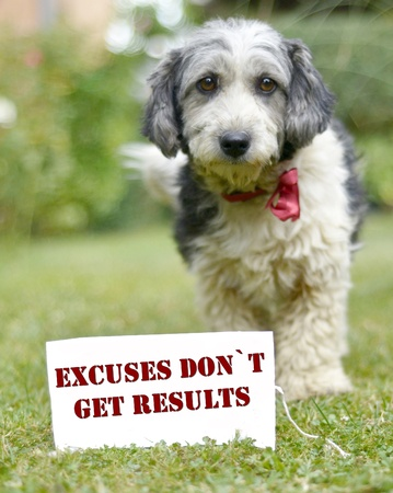 excuse: picture of a The cute black and white adopted stray dog on a green grass,focus on a head of dog. card with text Stock Photo