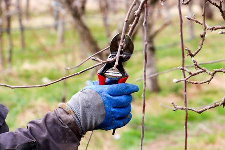 3 月にりんごの木の剪定の少し民家 写真素材