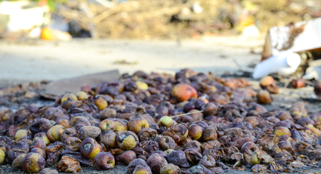Rotten apples ,organic pollution concept,image of a