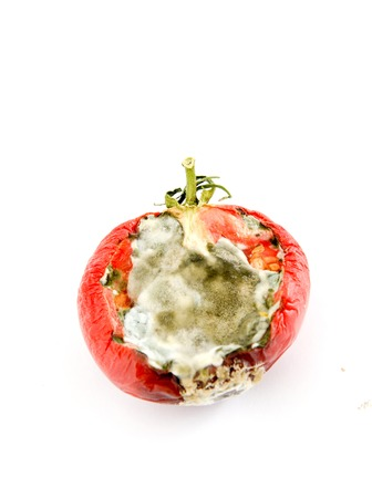 rotten tomato isolated on white,image of a 版權商用圖片