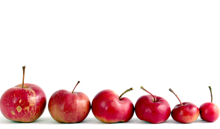 Several organic apples , big to small, on white background
