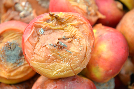 Rotten disgusting apple, many apple,image of a 스톡 콘텐츠