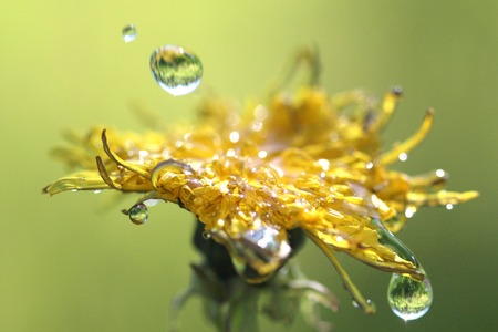 Waterdrops on a yellow leaf Stock Photo