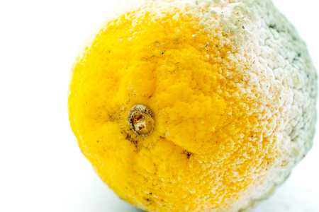 Rotten Lemon Fruit on White Background