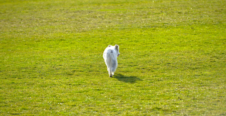 homeless abandonedstray dog on a soccer field