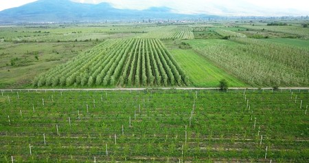 drone photography,aerial view of orchards in resen, prespa, macedonia,image Stock Photo