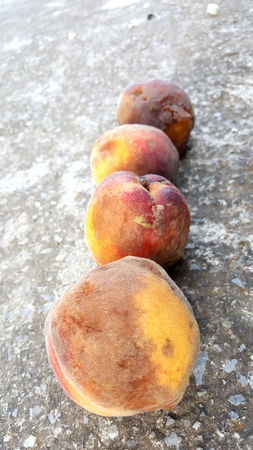 four rotten peaches on a cement background Stock Photo