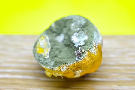 rotten lemon, citrus fruit image