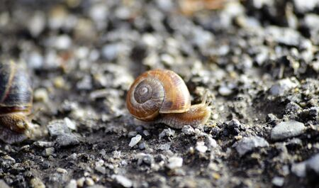 garden snail on an old apshalt road image Imagens