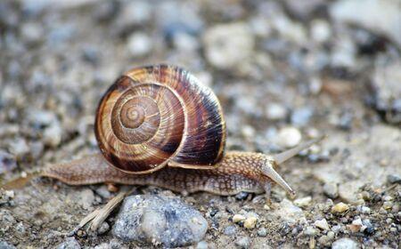 garden snail on an old apshalt road image Imagens - 127388175