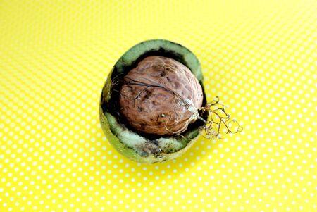 image of raw organic nuts, studio shot on yellow image