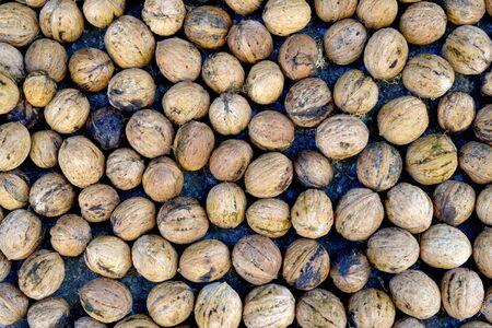 image of organic nuts, autumn concept image Фото со стока - 131364214